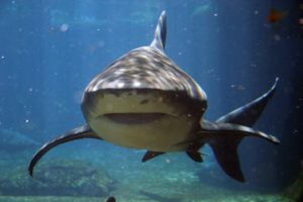 shark---ushaka-marine-world-261037-m